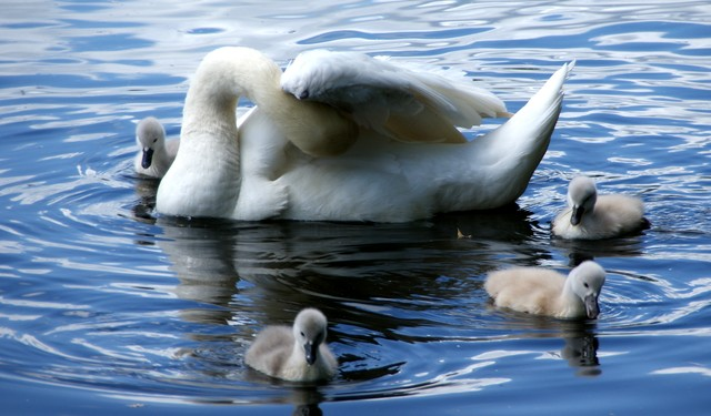 swan-islands-in-crimea